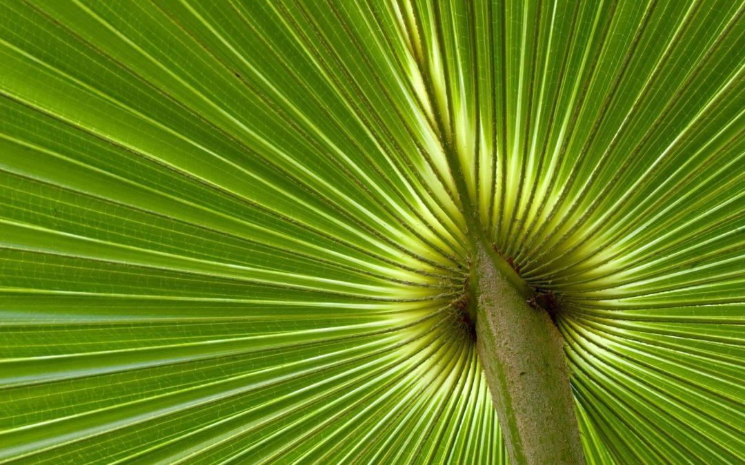 Erfolgreiche Führung: 7 Beispiele aus der Natur