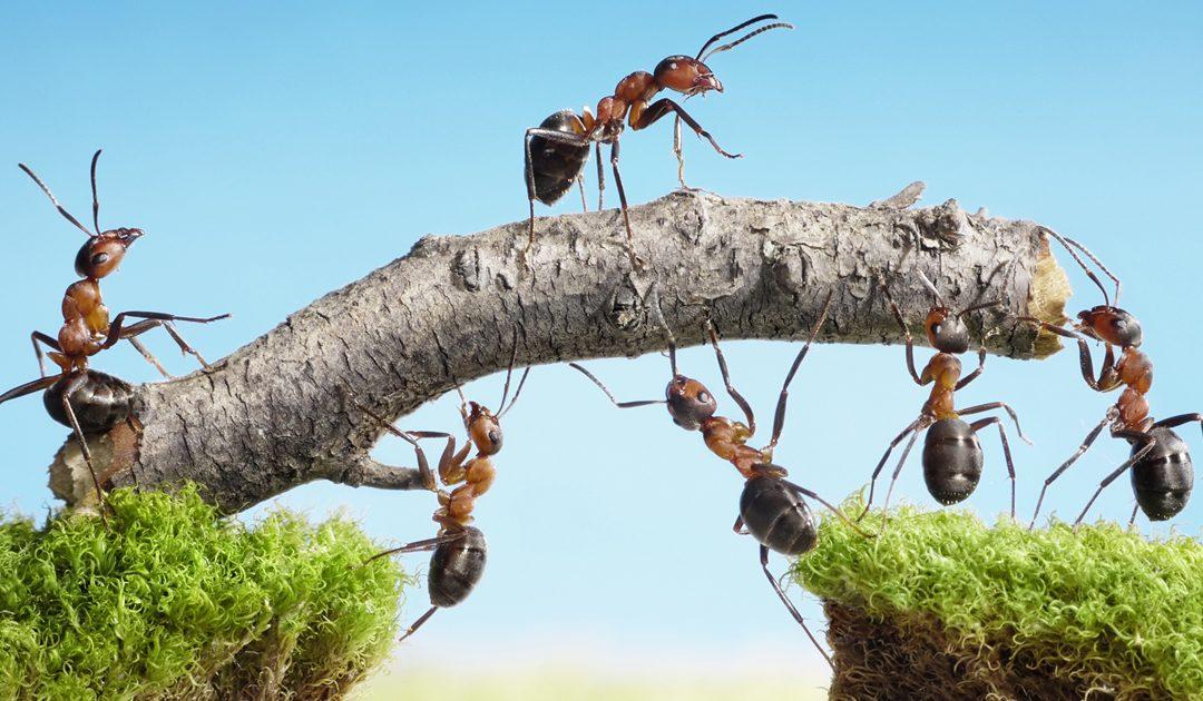 Teamspirit: Wie Sie als Leader ein Wir-Gefühl schaffen